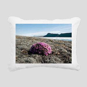 Moss campion (Silene acaulis) - Pillow