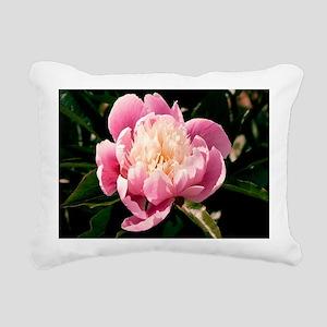 Paeonia lactiflora 'Chun Xiao' - Pillow