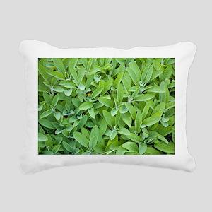 Sage (Salvia sp.) - Pillow