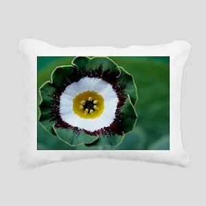 Show auricula 'Tosca' flower - Pillow
