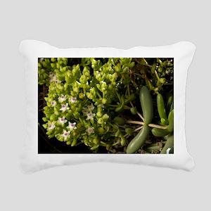 Stoeberia frutescens flowers - Pillow