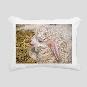 Angora goat kid - Pillow