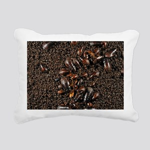 Cave cockroaches on bat guano - Pillow