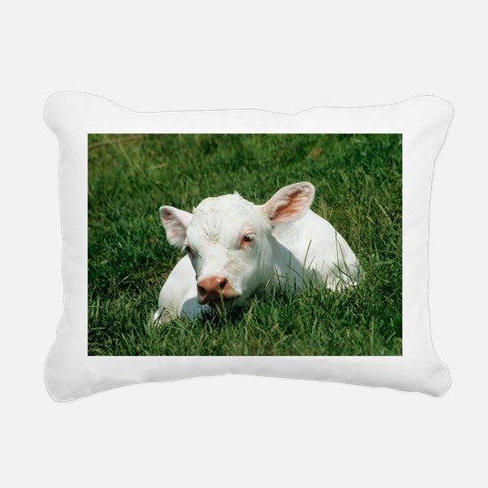 Charolais calf - Pillow