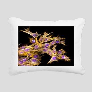 Fibroblast cells, fluorescent micrograph - Pillow