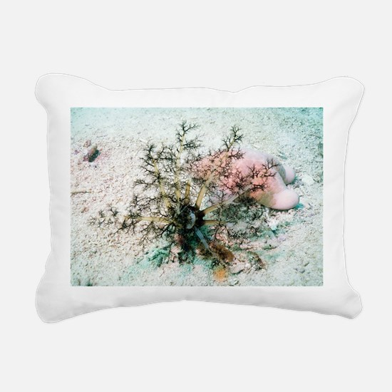 Sea cucumber and starfish - Pillow