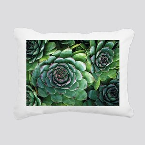 'Hens and chicks' succulents - Pillow