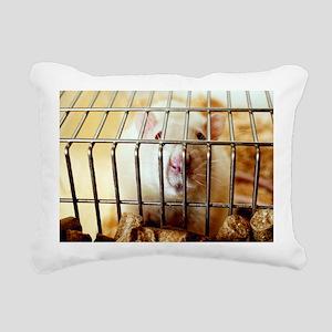 Sprague-Dawley laboratory rat - Pillow