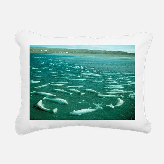 Beluga whales moulting - Pillow