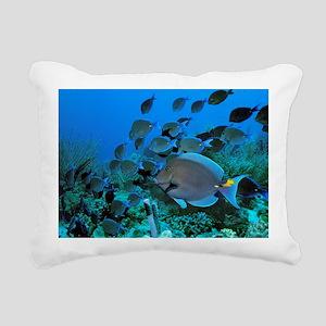 Blue tang surgeonfish - Pillow