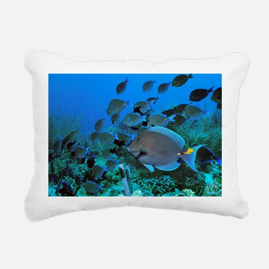 Blue tang surgeonfish - Pillow
