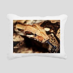 Boa constrictor - Pillow