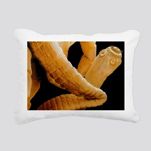 Coloured SEM of a tapeworm, Taenia sp - Pillow