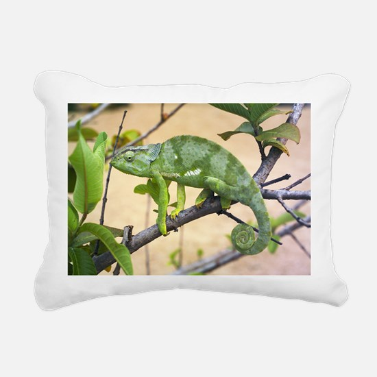 Flap-necked chameleon - Pillow