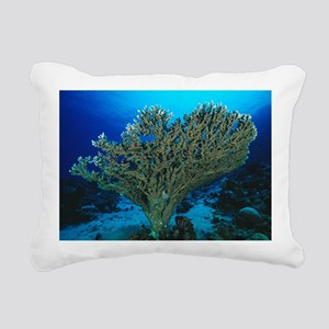 Hard coral - Pillow