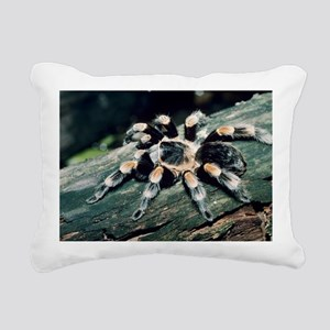 Mexican redknee tarantula - Pillow