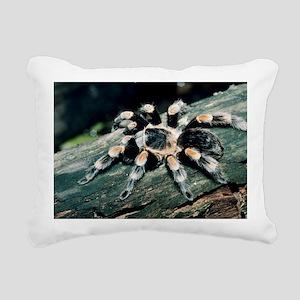 Mexican redknee tarantula - Pillow
