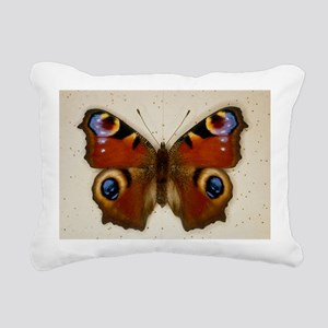Pinned specimen of peacock butterfly, Inachis io -