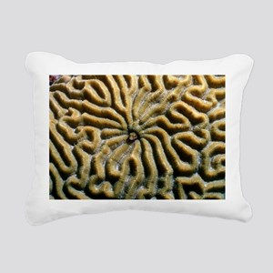 Roughhead blenny in a brain coral - Pillow
