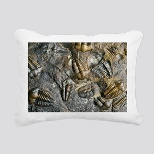 Trilobite fossils - Pillow