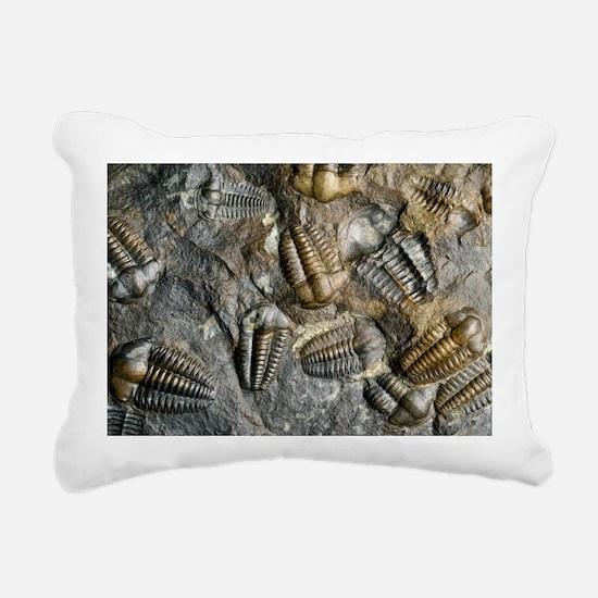 Trilobite fossils - Pillow