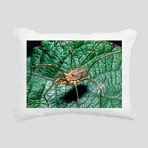View of a harvestman (order Opiliones) on a leaf -