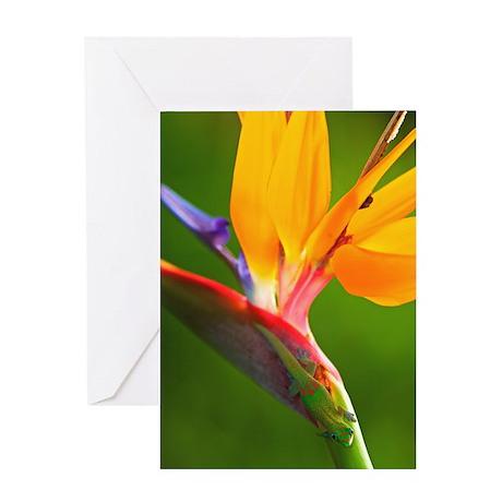 Bird of Paradise Flower #1 Greeting Card