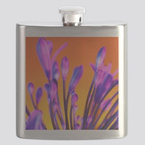 African lily (Agapanthus sp.) - Flask