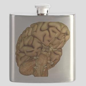 Brain anatomy - Flask