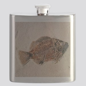 Fossilised fish, Priscacara serata - Flask