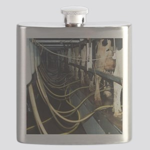 Milking dairy cows - Flask