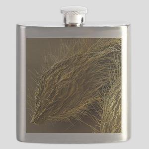 Seed of Old Man's Beard, SEM - Flask