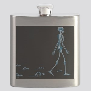Skeletons of a human and rats, X-ray - Flask