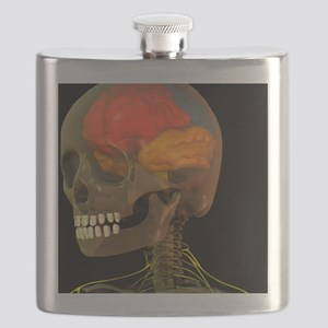 Skull and brain anatomy, artwork - Flask