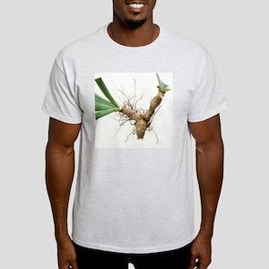 Iris rhizomes - Light T-Shirt