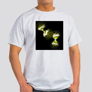 Cell division - Light T-Shirt