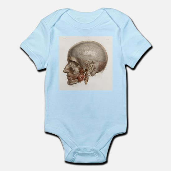 Head vascular anatomy, historical artwork - Infant