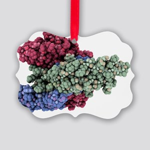 Thyroid-stimulating hormone molecule - Picture Orn