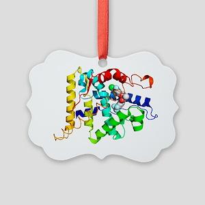 Androgen receptor, molecular model - Picture Ornam