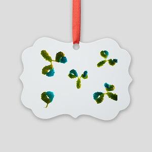 Antibodies, artwork - Picture Ornament