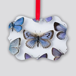 British large Blue butterfly colln. 1865 - Picture