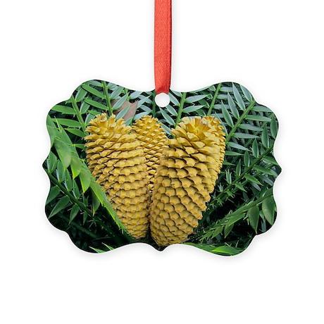 Cycad cones - Picture Ornament