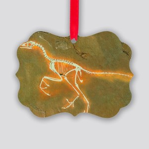 Fossil of Archaeopterix, one of the first birds -