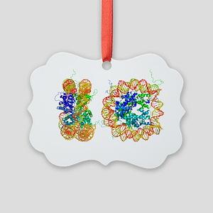 DNA nucleosome, molecular model - Picture Ornament