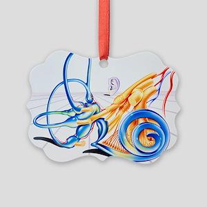 Artwork of inner ear - Picture Ornament