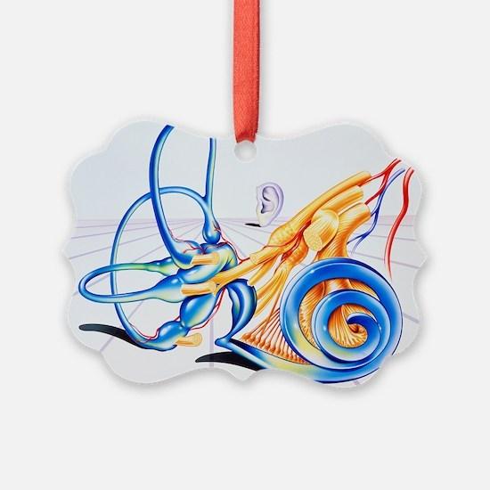 Artwork of inner ear - Ornament