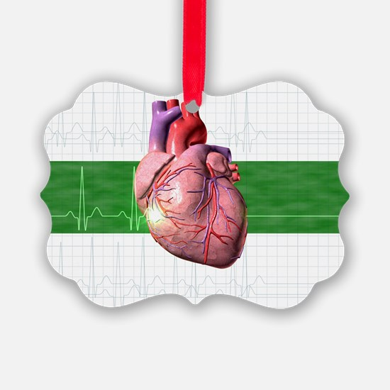 Human heart - Ornament