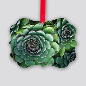 'Hens and chicks' succulents - Picture Ornament