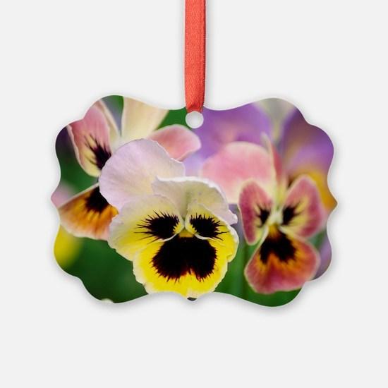 Pansies (Viola wittrockiana) - Ornament