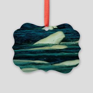 Beluga whales - Picture Ornament